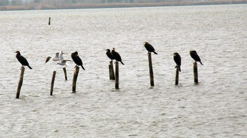 Birdwatching @Massaciuccoli